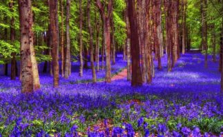Berkeley Accupunture Trees and purple flowers