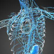 Tips to having an awesome lymphatic system!