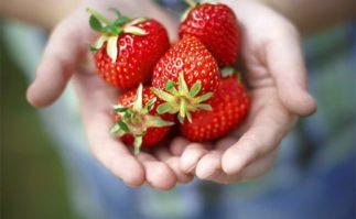 Berkeley Accupunture Fresh Strawberries