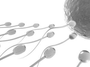 Men's fertility, motility and sperm count can all be improved with the help of acupuncture and Chinese herbal medicine